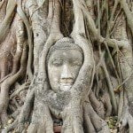 buddha tree face