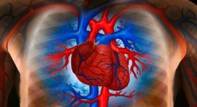 A fix for the broken heart: Heart Stem Cells help Attack Victims