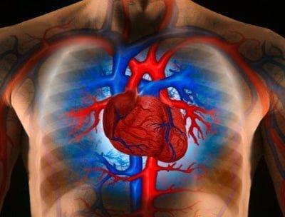 stem cells heart