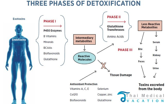 full-body-detoxification-bangkok-thailand-phuket