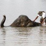 thailand-floods-unesco-elephant_41929_600x450
